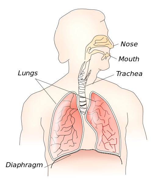 How To Speak With Your Diaphragm