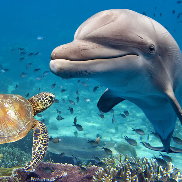 7 Fun Facts About Dolphins & Coloring Page ...
