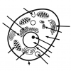 PDF handout animal-cell-label-with-answer-key